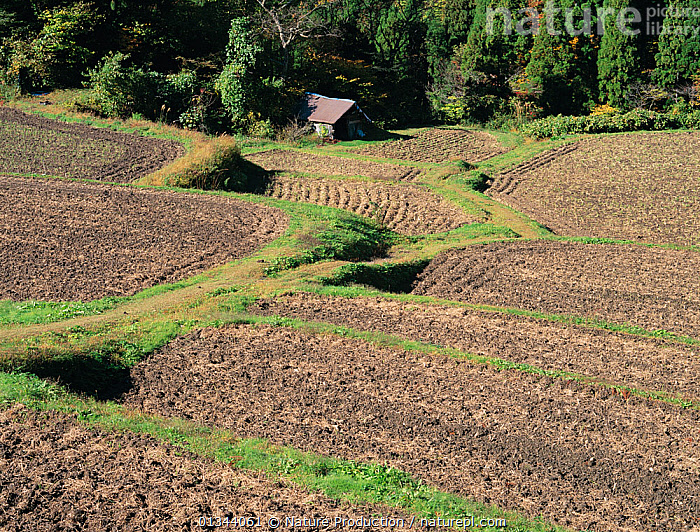Aerial view of rice paddy fields (Oryza sativa) fixed-point observation of seasonal changes, ploughed fields in early winter, Shiga, Japan, November, sequence 7/8  ,  AERIALS,AGRICULTURE,ASIA,CROPS,GRAMINEAE,GRASSES,JAPAN,LANDSCAPES,MONOCOTYLEDONS,PADDIES,PLANTS,POACEAE,RICE,SEASONS,SEQUENCE,TERRACES,WINTER  ,  Nature Production