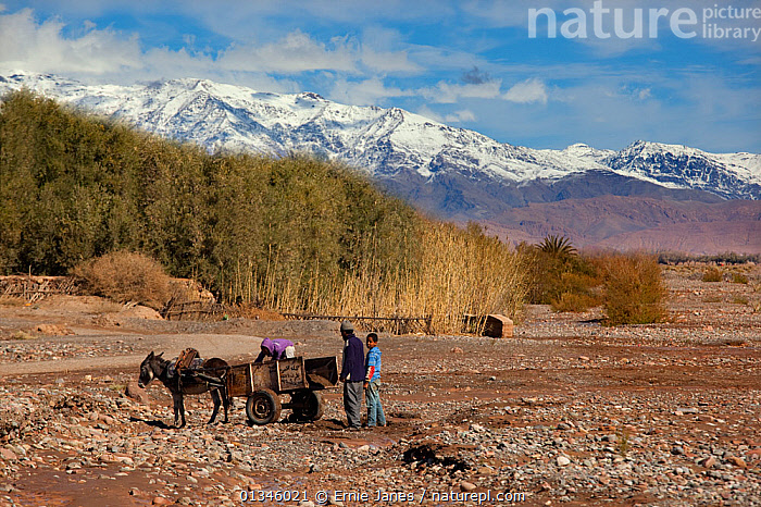 People standing by a donkey cart with the Atlas Mountains in the distance. Skoura Oasis, Morocco, North Africa, March 2011.  ,  AFRICA,ASSES,DESERTS,DRY,LANDSCAPES,MAMMALS,MOROCCO,MOUNTAINS,NORTH AFRICA,OUTDOORS,PEOPLE,PERISSODACTYLA,SNOW,VEHICLES,VERTEBRATES  ,  Ernie Janes