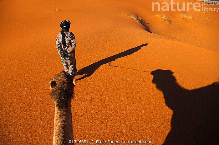 Looking down from the back of a camel. Erg Chebbi Dunes, Sahara Desert, Morocco, North Africa, March.  ,  AFRICA,ARTIODACTYLA,CAMELIDS,CAMELS,DESERTS,MAMMALS,MOROCCO,NORTH AFRICA,OUTDOORS,PEOPLE,RIDING,SAND,SHADOWS,VERTEBRATES  ,  Ernie Janes