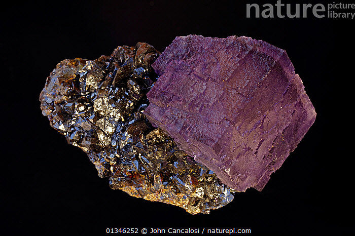 Fluorite (CaF2) (calcium fluoride) on Sphalerite (ZnS) (zinc sulfide).Fluorite is a source of fluorine-used in the manufacture of milk glass-as a flux for the steel industry and in refining of aluminum. One of the most popular minerals among collectors, Sphalerite is the principle ore of zinc. Sample from Elmwood Mine, Smith County, Tennessee, USA.  ,  BLACK,CUTOUT,GEOLOGY,MINERALS,ORES,ROCKS,STUDIO  ,  John Cancalosi