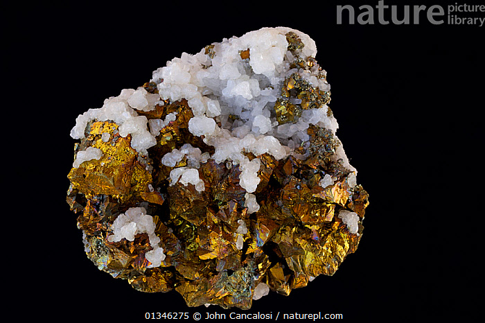 Chalcopyrite (CuFeS2) (Golden variety), the major ore of copper. Sample from Herja, near Baia Mare, Romania.  ,  BLACK,CUTOUT,GEOLOGY,MINERALS,ORES,ROCKS,STUDIO  ,  John Cancalosi