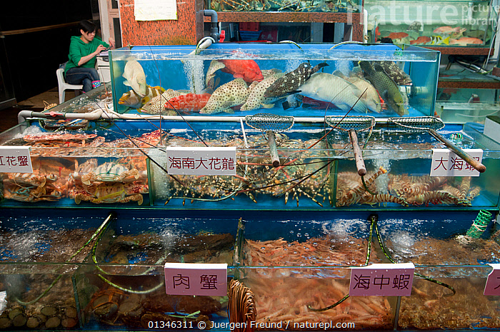 Live reef fish in tanks beside seafood restaurant, Lei Yue Mun harbour, Hong Kong, China, April 2009. .  ,  ASIA,CHINA,CORAL TRIANGLE,FISH,INDO PACIFIC,MARINE,MARKET,MIXED SPECIES,RESTAURANTS,TRADE,  ,  Jurgen Freund