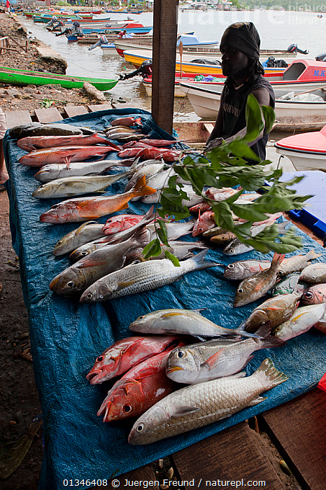 Fish laid out at street market, Gizo, capital of the Western Province, Solomon Islands, Melanesia, July 2010.  ,  ASIA,BOATS,COASTS,CORAL TRIANGLE,FISH,INDO PACIFIC,MARKET,OUTDOORS,PEOPLE,TRADE,,MELANESIA  ,  Jurgen Freund