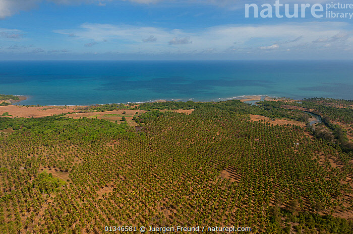 Aerial view of coconut plantation by the coast, Palawan, Philippines, April 2010.  ,  AERIALS,COASTS,CORAL TRIANGLE,CROPS,INDO PACIFIC,LANDSCAPES,MONOCULTURE,PHILIPPINES,PLANTATIONS,SOUTH EAST ASIA,  ,  Jurgen Freund