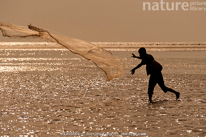 Silhouette of fisherman throwing his castnet in the mudflats at lowtide, East Timor, August 2010.  ,  COASTS,CORAL TRIANGLE,FISHING,INDO PACIFIC,MAN,PEOPLE,SILHOUETTES,SOUTH EAST ASIA,WORKING,  ,  Jurgen Freund