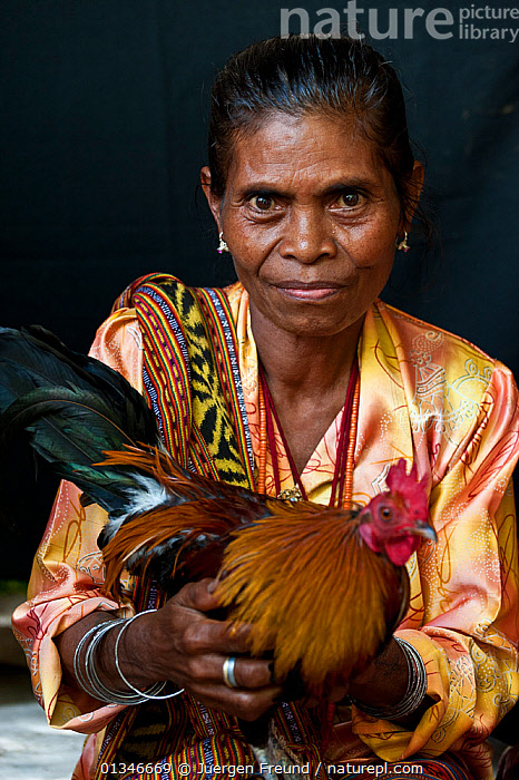 Portrait of East Timorese woman in traditional clothing with chicken, Maubara, East Timor, August 2010.  ,  ASIAN,CORAL TRIANGLE,HEN,INDO PACIFIC,PEOPLE,PORTRAITS,POULTRY,SOUTH EAST ASIA,VERTICAL,WOMAN,  ,  Jurgen Freund