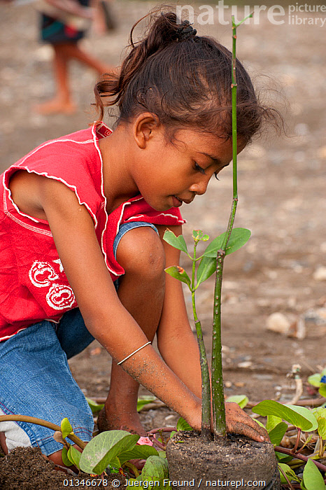 Child planting a mangrove shoot, Mangrove reforestation project in Dili, East Timor, August 2010.  ,  CHILDREN,CORAL TRIANGLE,ENVIRONMENTAL,INDO PACIFIC,MANGROVES,PEOPLE,PLANTS,REFORESTATION,SOUTH EAST ASIA,VERTICAL,  ,  Jurgen Freund