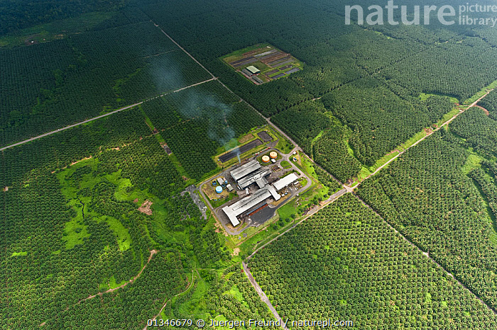 Aerial view of Palm oil plantation (Elaeis quineesis Jacq) New Britain Pam Oil Limited (NBPOL), Papua New Guinea, October 2008.  ,  AERIALS,BUILDINGS,CORAL TRIANGLE,CROPS,INDO PACIFIC,LANDSCAPES,MONOCULTURE,PALMS,PLANTATIONS,PNG,SOUTH EAST ASIA,  ,  Jurgen Freund