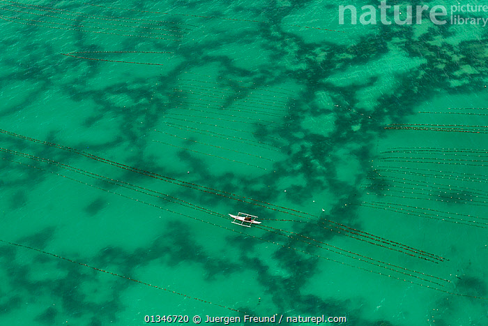 Aerial view of a seaweed farmer tending his crop, growing agar-agar for processing into carageenan (gelatinous extracts used as binder for food or product) Philippines, May 2009  ,  aerial view,AERIALS,agar agar,ALGAE,background people,boat,BOATS,catalogue4G,COMMERCIAL,coral triangle,CROPS,elevated view,Farmer,farming,fishing industry,GREEN,LANDSCAPES,local industry,MARINE,Philippines,sea,SEAWEED,SOUTH EAST ASIA,tending,view from above,WWF,Plants,SOUTH-EAST-ASIA,Asia,JURGEN  ,  Juergen Freund