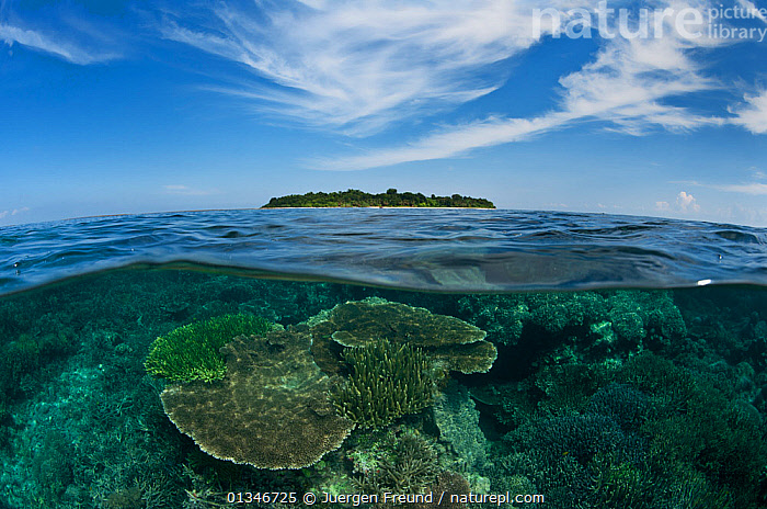 Split level view of coral reef and Sipadan Island, Sabah, Malaysia, June 2009.  ,  CORAL TRIANGLE,CORAL REEFS,INDO PACIFIC,ISLANDS,MALAYSIA,SOUTH EAST ASIA,SPLIT LEVEL,TROPICAL,UNDERWATER,,SOUTH-EAST-ASIA,Asia  ,  Jurgen Freund