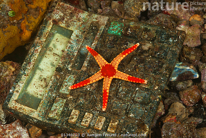 Necklace sea star (Fromia monilis) resting on discarded adding machine, pollution of coastal waters, Moluccas Islands, Indonesia  ,  ASTEROIDEA,coral triangle,ECHINODERMS,ENVIRONMENTAL,INDONESIA,INDO-PACIFIC,INVERTEBRATES,POLLUTION,RED,SEA-STARS,SOUTH-EAST-ASIA,STARFISH,Technology,TROPICAL,UNDERWATER,WWF,FROMIA MONILIS,,Waste,Environment,Environmental Issues,Environmental Damage,Littering,Nature Reclamation,Nature taking over,Marine Pollution,  ,  Jurgen Freund