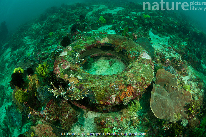 Old rubber tyre turned artificial reef, Komodo NP, Indonesia, August 2009  ,  artificial,coral triangle,CORAL-REEFS,CORALS,GREEN,INDO-PACIFIC,LANDSCAPES,MARINE,NP,POLLUTION,SOUTH-EAST-ASIA,TROPICAL,UNDERWATER,WWF,LANDSCAPES,,Waste,Environment,Environmental Issues,Environmental Damage,Littering,Nature Reclamation,Nature taking over,Marine Pollution,Colonisation,  ,  Jurgen Freund