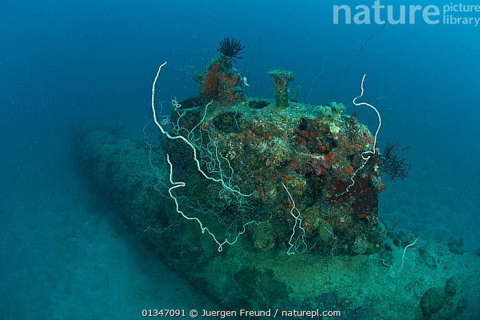 Nature Picture Library - Japanese mini submarine wreck 50 meters