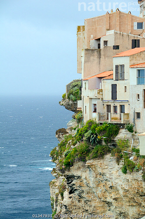 Buildings perched precariously on limestone sea cliffs with plants. Bonifacio, Southern tip of Corsica, France, May 2010., BUILDINGS,CLIFFS,COASTS,CORSICA,EUROPE,FRANCE,LANDSCAPES,MEDITERRANEAN,ROCKS,SEASCAPES,TOWNS,VERTICAL,Geology, Nick Upton
