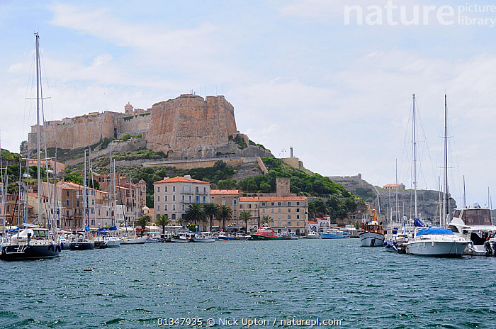 Sailing yachts moored in Bonifacio harbour overlooked by the Bastion de l'Etendard fortress and the citadel. Southern tip of Corsica, France, May 2010., BAYS,BOATS,BUILDINGS,CORSICA,EUROPE,FRANCE,HARBOURS,LANDSCAPES,MEDITERRANEAN,MOUNTAINS,SAILING BOATS,TOURISM,VEHICLES,WATER,YACHTS, Nick Upton