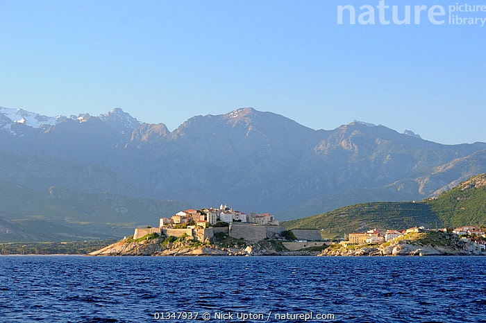 Medieval walled citadel of Calvi below snow covered peaks of the 2000m high Monte Padro ridge in dawn light. Corsica, France, May 2010., COASTS,CORSICA,EUROPE,FRANCE,LANDSCAPES,MEDITERRANEAN,MOUNTAINS,SEAS,SEASCAPES,TOWNS, Nick Upton