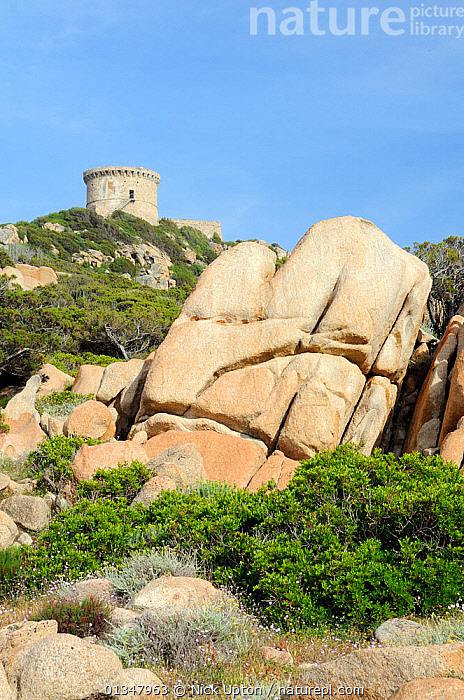 16th Century Genoese watchtower, the largest on Corsica, perched on a rocky headland, surrounded by huge weathered granite boulders and coastal maquis scrub. Campomoro Point, Corsica, France, May 2010.  ,  BUILDINGS,CORSICA,EUROPE,FRANCE,HISTORIC,LANDSCAPES,MAQUIS,MEDITERRANEAN,ROCKS,VERTICAL  ,  Nick Upton