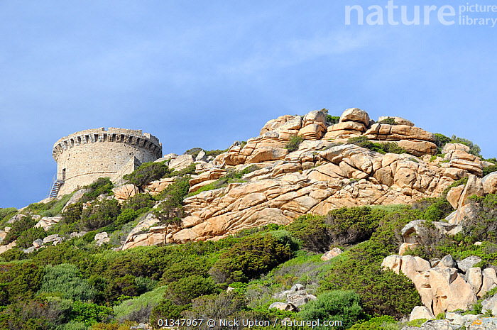 16th Century Genoese watchtower, the largest on Corsica, perched on a weathered granite headland and surrounded by coastal maquis scrub. Campomoro Point, Corsica, France, May 2010.  ,  BUILDINGS,CORSICA,EUROPE,FRANCE,HISTORIC,LANDSCAPES,MEDITERRANEAN,ROCKS  ,  Nick Upton