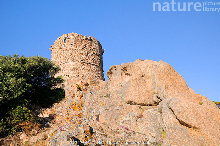 17th Century Genoese watchtower perched on a granite outcrop. Cape Roccapina, southern Corsica, France, May 2010., BUILDINGS,CORSICA,EUROPE,FRANCE,HISTORIC,LANDSCAPES,MEDITERRANEAN,RUINS, Nick Upton