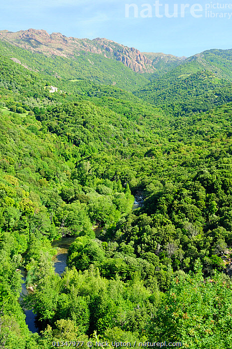 Deciduous Mediterranean forest covering mid-elevation mountain landscape within Corsica's National Park (Parc Naturel Regional de Corse). Propriano, Corsica, France, June 2010., CORSICA,EUROPE,FORESTS,FRANCE,HILLS,LANDSCAPES,MEDITERRANEAN,MOUNTAINS,NP,RESERVE,RIVERS,VALLEYS,VERTICAL,WOODLANDS,National Park, Nick Upton