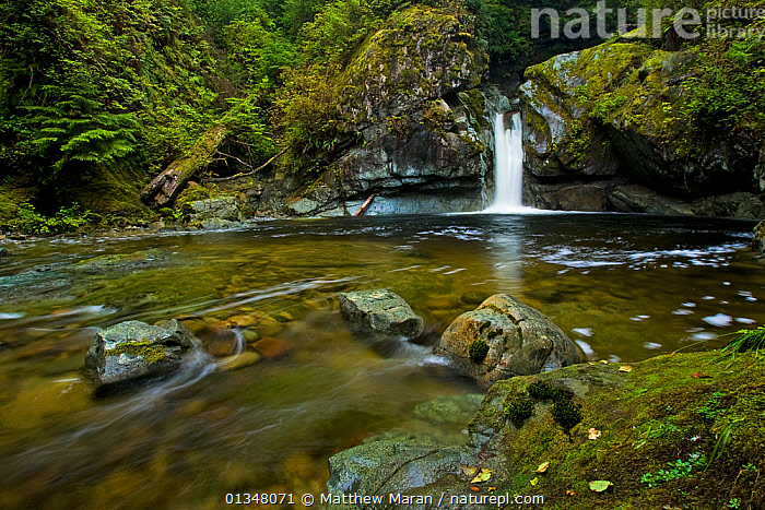 A waterfall at a woodland pool. Pacific Rim National Park, Vancouver Island, Canada, September 2010., BRITISH COLUMBIA,CALM,CANADA,FORESTS,LAKES,LANDSCAPES,NORTH AMERICA,NP,RESERVE,RIVERS,ROCK,STREAMS,TEMPERATE RAINFOREST,VANCOUVER,WATER,WATERFALLS,WEST CANADA,WOODLANDS,National Park, Matthew Maran