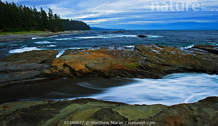 Waves washing onto rocks on a forested coastline. Pacific Rim National Park, Vancouver Island, Canada, September 2010., BRITISH COLUMBIA,CANADA,COASTS,FORESTS,LANDSCAPES,NORTH AMERICA,NP,RESERVE,ROCKS,SEASCAPES,TEMPERATE RAINFOREST,VANCOUVER,VANCOUVER BOOK,WATER,WEST CANADA,WOODLANDS,National Park, Matthew Maran