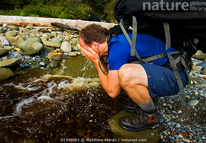 A hiker refreshing himself with water from a woodland stream. The West Coast Trail, Pacific Rim National Park, Vancouver Island, Canada, September., BRITISH COLUMBIA,CANADA,HIKING,NORTH AMERICA,NP,OUTDOORS,PEOPLE,RESERVE,STREAMS,TOURISM,VANCOUVER,VANCOUVER BOOK,WATER,WEST CANADA,National Park, Matthew Maran