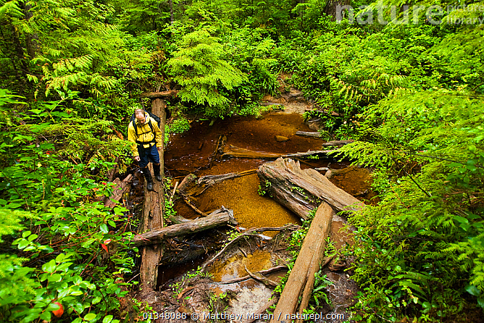 A hiker crossing water over a fallen tree. The West Coast Trail, Pacific Rim National Park, Vancouver Island, Canada, September 2010. Model released.  ,  BRITISH COLUMBIA,CANADA,FOLIAGE,FORESTS,HIKING,LEAVES,NORTH AMERICA,NP,OUTDOORS,PEOPLE,RESERVE,STREAMS,TOURISM,UNDERSTOREY,VANCOUVER,VANCOUVER BOOK,WATER,WEST CANADA,WOODLANDS,National Park  ,  Matthew Maran
