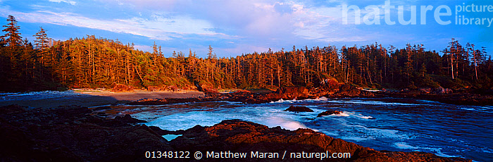 A view of a forested inlet lit by low sunlight. Aggro Beach, west coast of Vancouver Island, Canada, September 2010.  ,  Aggro Beach,ATMOSPHERIC,bay,bays,BEACHES,beauty in nature,British Columbia,CALM,CANADA,catalogue4,COASTS,forest,FORESTS,inlet,LANDSCAPES,nature,Nobody,NORTH AMERICA,PANORAMIC,panoramic image,rock,Scenic,sea,seascapes,sunlight,TEMPERATE RAINFOREST,Vancouver,vancouver book,Vancouver Island,West Coast,west canada,woodland  ,  Matthew Maran