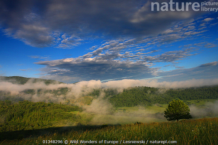 Mist over Krywe in Sun River Valley. Bieszczady, Carpathian Mountains, Poland, June 2009., CARPATHIANS,EASTERN EUROPE,EUROPE,FORESTS,GRZEGORZ LESNIEWSKI,LANDSCAPES,MIST,NP,POLAND,RESERVE,REWILDING,SKIES,VALLEYS,WOODLANDS,WWE,National Park , Eastern-Carpathians, Wild Wonders of Europe / Lesniewski