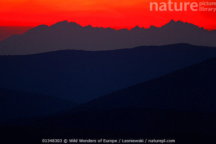 View of Tatra Mountains from Rozsypaniec Peak at sunset. Bieszczady, Carpathian Mountains, Poland, September 2009.  ,  ABSTRACT,BACKGROUNDS,BEAUTY IN NATURE,CARPATHIANS,COPYSPACE,DUSK,EASTERN EUROPE,EUROPE,GRZEGORZ LESNIEWSKI,LANDSCAPES,MOUNTAINS,NP,POLAND,RED,RESERVE,REWILDING,SILHOUETTES,SUNSET,WWE,National Park , Eastern-Carpathians  ,  Wild Wonders of Europe / Lesniewski