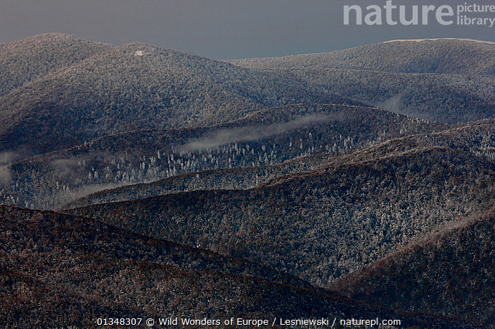 Carpathian beech forest, view from Polonina Wetlinska. Bieszczady, Carpathian Mountains, Poland, October 2009., CARPATHIANS,COLD,EASTERN EUROPE,EUROPE,FORESTS,FROST,GRZEGORZ LESNIEWSKI,LANDSCAPES,NP,POLAND,RESERVE,REWILDING,SNOW,WOODLANDS,WWE,Weather,National Park , Eastern-Carpathians, Wild Wonders of Europe / Lesniewski