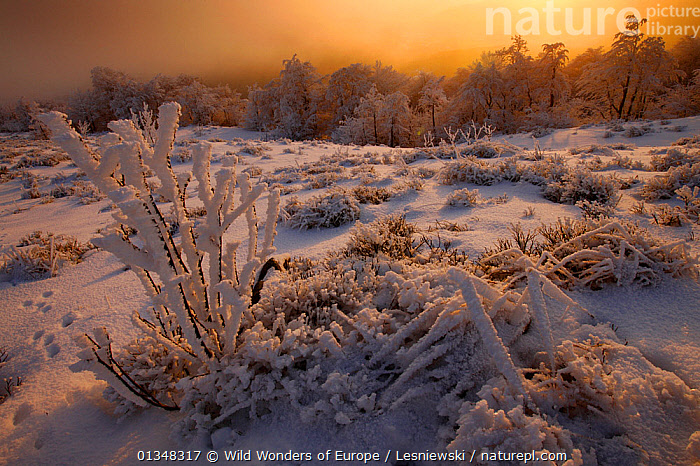 Winter at Rozsypaniec Peak. Bieszczady, Carpathian Mountains, Poland, January 2010., CARPATHIANS,EASTERN EUROPE,EUROPE,FORESTS,FROST,GRZEGORZ LESNIEWSKI,LANDSCAPES,LIGHT,NP,POLAND,RESERVE,REWILDING,SNOW,WOODLANDS,WWE,Weather,National Park , Eastern-Carpathians, Wild Wonders of Europe / Lesniewski