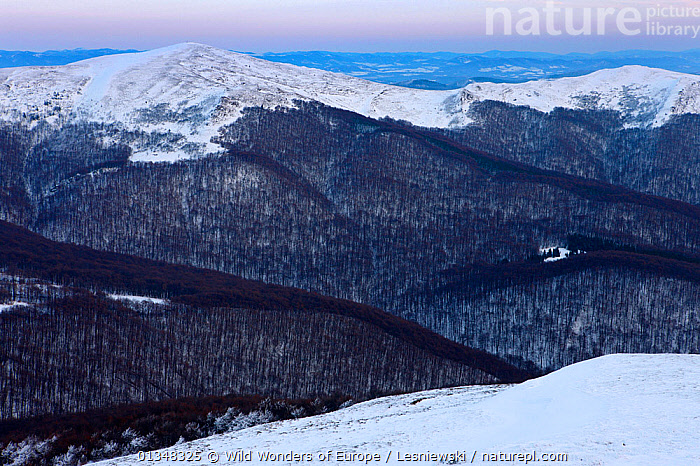 Halicz and Rozsypaniec Peaks. Bieszczady, Carpathian Mountains, Poland, January 2010., CARPATHIANS,EASTERN EUROPE,EUROPE,FORESTS,GRZEGORZ LESNIEWSKI,LANDSCAPES,MOUNTAINS,NP,POLAND,RESERVE,REWILDING,SNOW,WOODLANDS,WWE,National Park , Eastern-Carpathians, Wild Wonders of Europe / Lesniewski