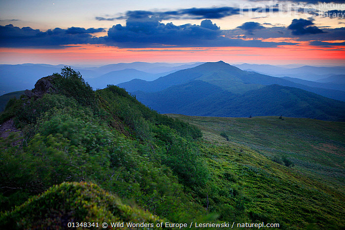 Polonina Wetlinska and Smerek Peak at sunset. Bieszczady, Carpathian Mountains, Poland, July 2007., CARPATHIANS,EASTERN EUROPE,EUROPE,FORESTS,GRZEGORZ LESNIEWSKI,LANDSCAPES,MIST,MOUNTAINS,NP,POLAND,RESERVE,REWILDING,SUNSET,WOODLANDS,WWE,National Park , Eastern-Carpathians, Wild Wonders of Europe / Lesniewski