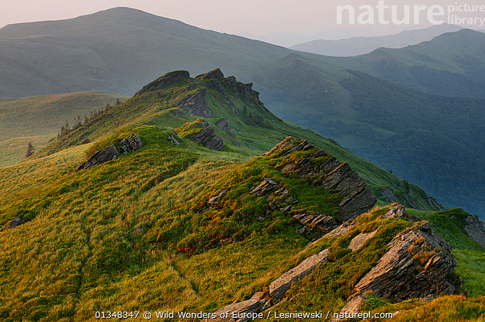 Krzemien Peak. Bieszczady, Carpathian Mountains, Poland, July 2010., CARPATHIANS,EASTERN EUROPE,EUROPE,GRZEGORZ LESNIEWSKI,LANDSCAPES,MIST,MOUNTAINS,NP,POLAND,RESERVE,REWILDING,WWE,National Park , Eastern-Carpathians, Wild Wonders of Europe / Lesniewski