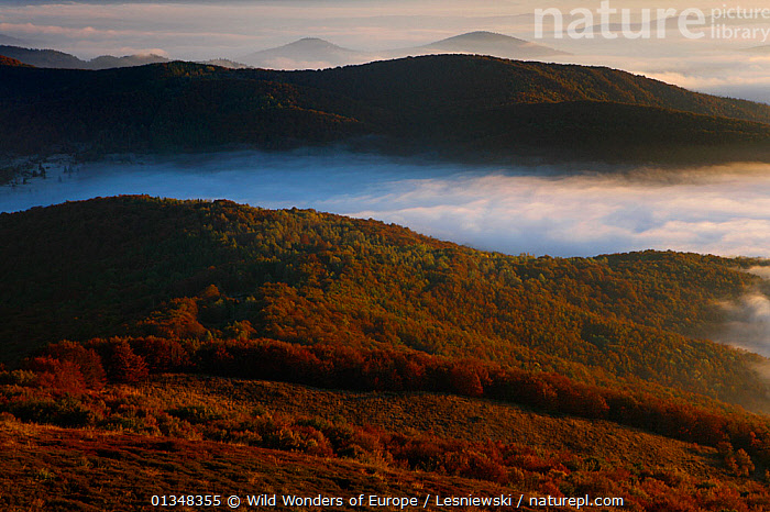 Magura Stuposianska Peak in clouds, view from Polonina Carynska. Bieszczady, Carpathian Mountains, Poland, October 2010., CARPATHIANS,CLOUDS,DAWN,EASTERN EUROPE,EUROPE,FORESTS,GRZEGORZ LESNIEWSKI,LANDSCAPES,MIST,MOUNTAINS,NP,POLAND,RESERVE,REWILDING,WOODLANDS,WWE,Weather,National Park , Eastern-Carpathians, Wild Wonders of Europe / Lesniewski
