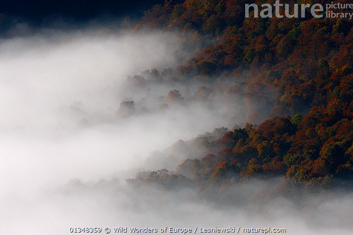 Carpathian beech forest in clouds, view from Polonina Carynska. Bieszczady, Carpathian Mountains, Poland, October 2010., CARPATHIANS,CLOUDS,EASTERN EUROPE,EUROPE,FORESTS,GRZEGORZ LESNIEWSKI,LANDSCAPES,MIST,NP,POLAND,RESERVE,REWILDING,WOODLANDS,WWE,Weather,National Park , Eastern-Carpathians, Wild Wonders of Europe / Lesniewski