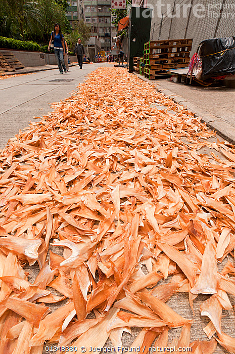 Sharks' fins laid out to dry on the streets of Hong Kong's Sheung Wan District, April 2009., ASIA,CHINA,CHONDRICHTHYES,CORAL TRIANGLE,CULTURES,DRYING,FISH,FOOD,HONG KONG,INDO PACIFIC,MAN,MARINE,PEOPLE,ROADS,SHARKS,SOUTH EAST ASIA,STREET,TRADITIONAL,URBAN,VERTEBRATES,VERTICAL,WALKING,WOMAN,, Jurgen Freund