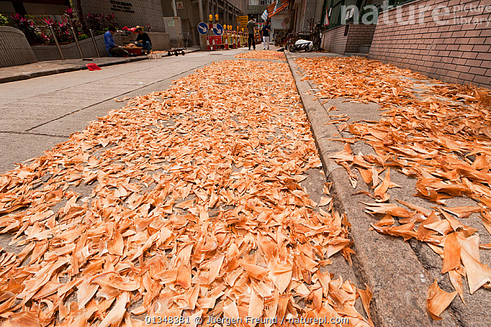 Sharks' fins laid out to dry on the streets of Hong Kong's Sheung Wan District, April 2009., ASIA,CHINA,CHONDRICHTHYES,CORAL TRIANGLE,CULTURES,DRYING,FISH,FOOD,HONG KONG,INDO PACIFIC,MAN,MARINE,PEOPLE,ROADS,SHARKS,SOUTH EAST ASIA,STREET,TRADITIONAL,URBAN,VERTEBRATES,WOMAN,, Jurgen Freund