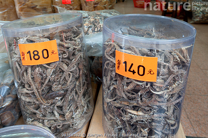 Dried seahorses, pipefishes, pegasus, and other marine products for sale in Hong Kong's Sheung Wan district, April 2009., ASIA,CHINA,CORAL TRIANGLE,CULTURES,ENVIRONMENTAL,FISH,FOOD,INDO PACIFIC,SHOPS,SOUTH EAST ASIA,, Jurgen Freund