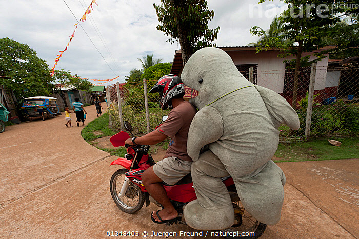 Mascot 'Waddy', part of a conservation project for the Irrawaddy dolphin (Orcaella brevirostris), getting a lift home on a motorcycle. North Palawan, Philippines, May 2009., CETACEANS,CONSERVATION,CORAL TRIANGLE,COSTUME,COSTUMES,CULTURES,DOLPHINS,DRIVING,FUNNY,INDO PACIFIC,MAMMALS,MEN,MOTORBIKES,MOTORCYCLES,PEOPLE,SOUTH EAST ASIA,VEHICLES,VERTEBRATES,,SOUTH-EAST-ASIA,Asia, Jurgen Freund