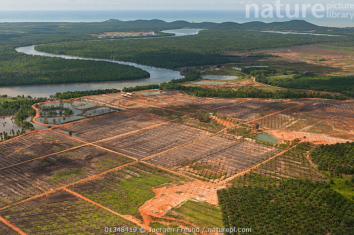Aerial view of palm oil plantations (Elaeis guineensis). Sabah, Malaysia, June 2009., AERIALS,AGRICULTURE,ARECACEAE,CORAL TRIANGLE,CROPS,FIELDS,GREEN,INDO PACIFIC,LANDSCAPES,MONOCOTYLEDONS,PALMS,PLANTATIONS,PLANTS,RIVERS,SOUTH EAST ASIA,, Jurgen Freund
