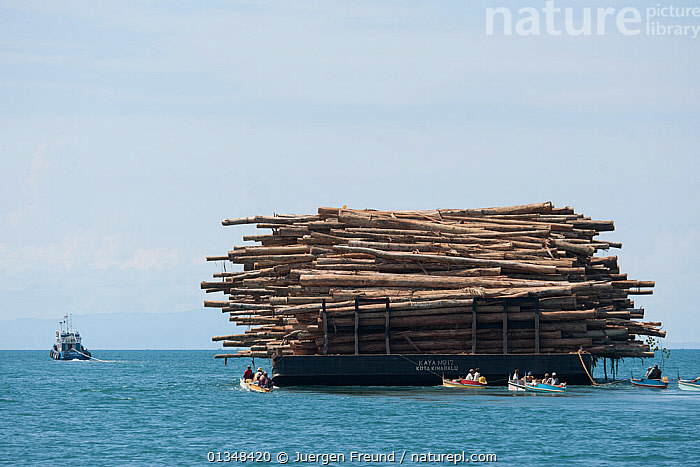 A barge full of logs. Illegal timber is brought into Sarawak from Kalimantan by both land and sea. Illegal logging in protected areas involves a complex network of people from all walks of life. The illegal timber can be 'laundered' ie made to appear legal. Malaysia, June 2009, ASIA,BARGES,BOATS,cargo,CARGO BOATS ,catalogue4G,coral triangle,DEFORESTATION,ENVIRONMENTAL,environmental concern,ILLEGAL,INDO PACIFIC,LARGE,large group of objects,large group of people,logging,Logs,lumber,lumber industry,Malaysia,MANOEUVRES,MIXED BOATS,OCEANS,overloaded,sarawak,SCALE,sea,SOUTH EAST ASIA,timber,timber industry,TOWING,TRADE,TUGS,view to land,WORKING,WORKING BOATS,WWF,WORKING-BOATS ,SIZE ,SOUTH-EAST-ASIA, Jurgen Freund