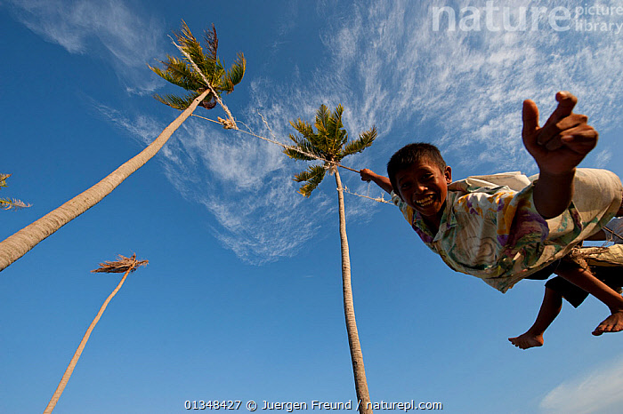 Bajau boys playing on a rope swing hung high up in two tall coconut trees. Sibuan Island, Malaysia, June 2009., ACTION,ASIA,BOY,CHILDREN,CORAL TRIANGLE,CULTURES,INDO PACIFIC,ISLANDS,PALMS,PEOPLE,PLAYING,SKY,SOUTH EAST ASIA,SWINGING,TREES,,PLANTS, Jurgen Freund