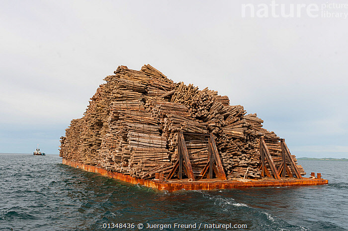 A barge full of logs. Illegal timber is brought into Sarawak from Kalimantan by both land and sea. Illegal logging in protected areas involves a complex network of people from all walks of life. The illegal timber can be 'laundered' ie made to appear legal. Malaysia, June 2009 . NOT AVAILABLE FOR MAGAZINE USE IN GERMAN-SPEAKING COUNTRIES UNTIL 1ST JULY 2013.  ,  ASIA,BARGES,BOATS,CORAL TRIANGLE,ENVIRONMENTAL,ILLEGAL,INDO PACIFIC,LOGS,OCEANS,SOUTH EAST ASIA,TIMBER,  ,  Jurgen Freund