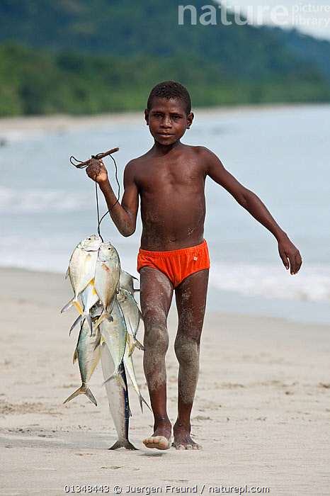 Young West Papuan boys carrying a catch of fresh fish to the kitchen. Batu Rumah, Bird's Head Peninsula, West Papua, Indonesia, July 2009., ASIA,BEACHES,BOYS,CARRYING,CHILDREN,COASTS,CORAL TRIANGLE,CULTURES,FISH,FISHING,GROUPS,INDONESIA,INDO PACIFIC,IRIAN JAYA,PORTRAITS,SOUTH EAST ASIA,VERTICAL,,SOUTH-EAST-ASIA,NEW-GUINEA, Jurgen Freund