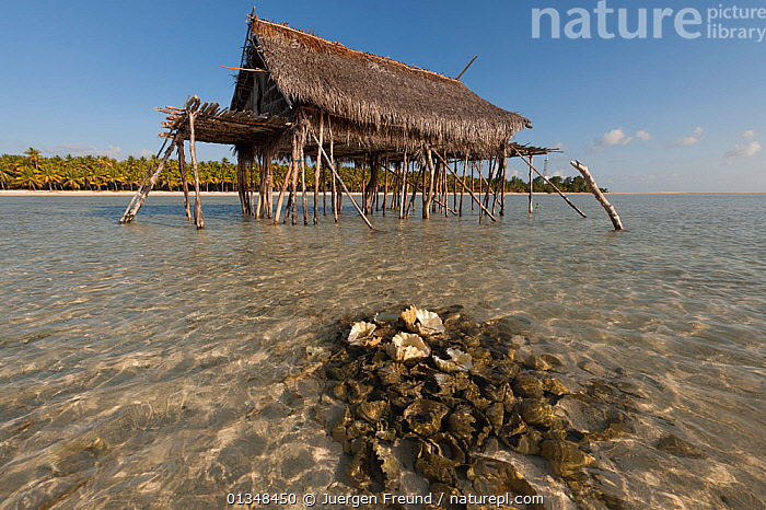 Coconut farmer's house on stilts in sea with a mound of discarded giant clam shells. Moromaho Island, Wakatobi, Sulawesi, Indonesia, November 2009.  ,  ASIA,BEACHES,BUILDINGS,CLAMS,COASTAL WATERS,CORAL TRIANGLE,INDO PACIFIC,ISLANDS,RUBBISH,SHALLOWS,SOUTH EAST ASIA,STILTS,TRADITIONAL,TROPICAL,WOODEN,,SOUTH-EAST-ASIA,INDONESIA,,Litter,Pollution,Waste,  ,  Jurgen Freund