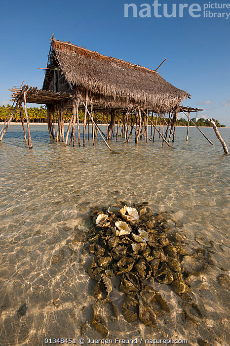 Coconut farmers' house on stilts in sea with a mound of discarded giant clam shells. Moromaho Island, Wakatobi, Sulawesi, Indonesia, November 2009., ASIA,BEACHES,BUILDINGS,CLAMS,COASTAL WATERS,CORAL TRIANGLE,INDO PACIFIC,ISLANDS,RUBBISH,SHALLOWS,SOUTH EAST ASIA,STILTS,TRADITIONAL,TROPICAL,VERTICAL,WOODEN,,SOUTH-EAST-ASIA,INDONESIA,,Litter,Pollution,Waste,, Jurgen Freund