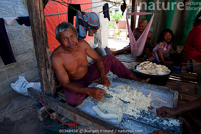 Man making patties of Cassava. The tuber is grated and serves as food staple, more common than rice for remote Indonesians. Runduma Island, Sulawesi, Indonesia, November 2009  ,  CHILDREN, COOKING, coral triangle, CULTURES, DICOTYLEDONS, EUPHORBIACEAE, FAMILIES, food, houses, INDOORS, INDO-PACIFIC, MAN, MEN, PEOPLE, PLANTS, SOUTH-EAST-ASIA, TRADITIONAL, TUBERS, WWF,Asia,Marine,PROCEDURES,INDONESIA,JURGEN  ,  Juergen Freund